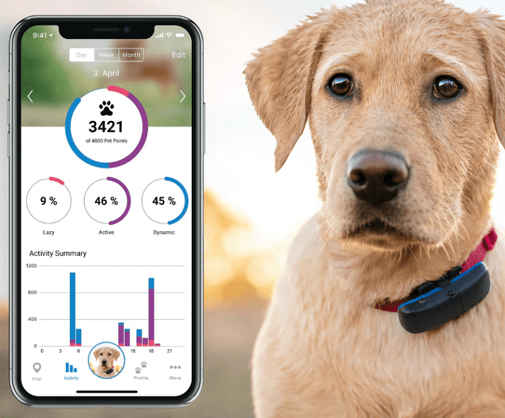 Hund med gps tracker og app på telefon